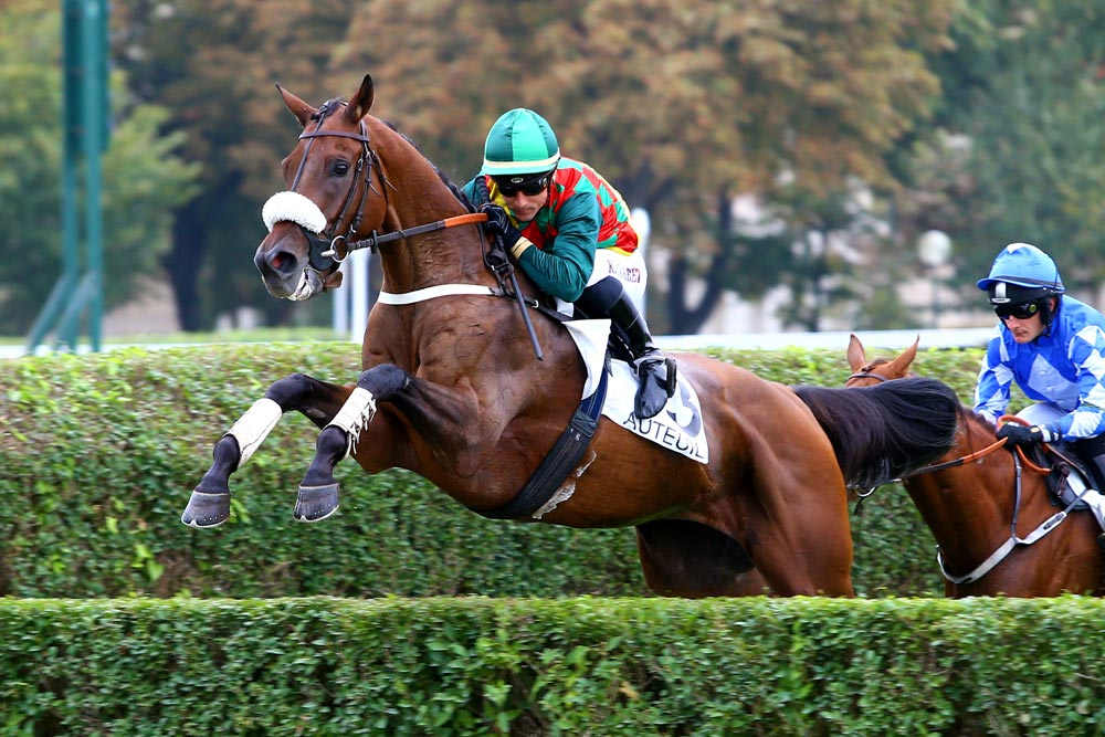 Le Cheval qui Gagne 44% de fois au Trot, Plat et Obstacles !